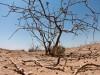 ريشه هاي بحران آب در ايران